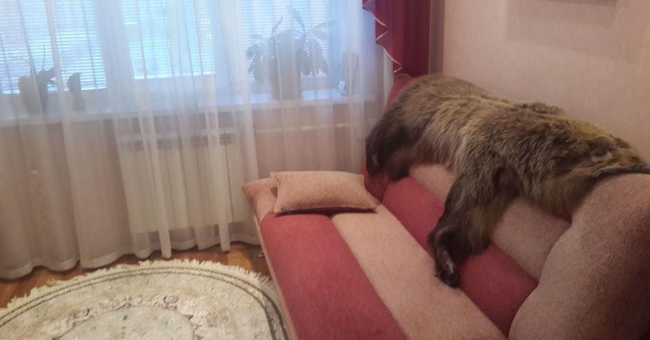 2-комн. квартиры г. Сургут, Маяковского 45 (р-н Северный жилой) фото 3